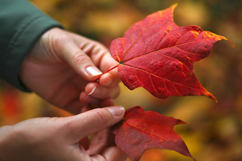 Red fall leaves in Kitsilano (Taz/Flickr)