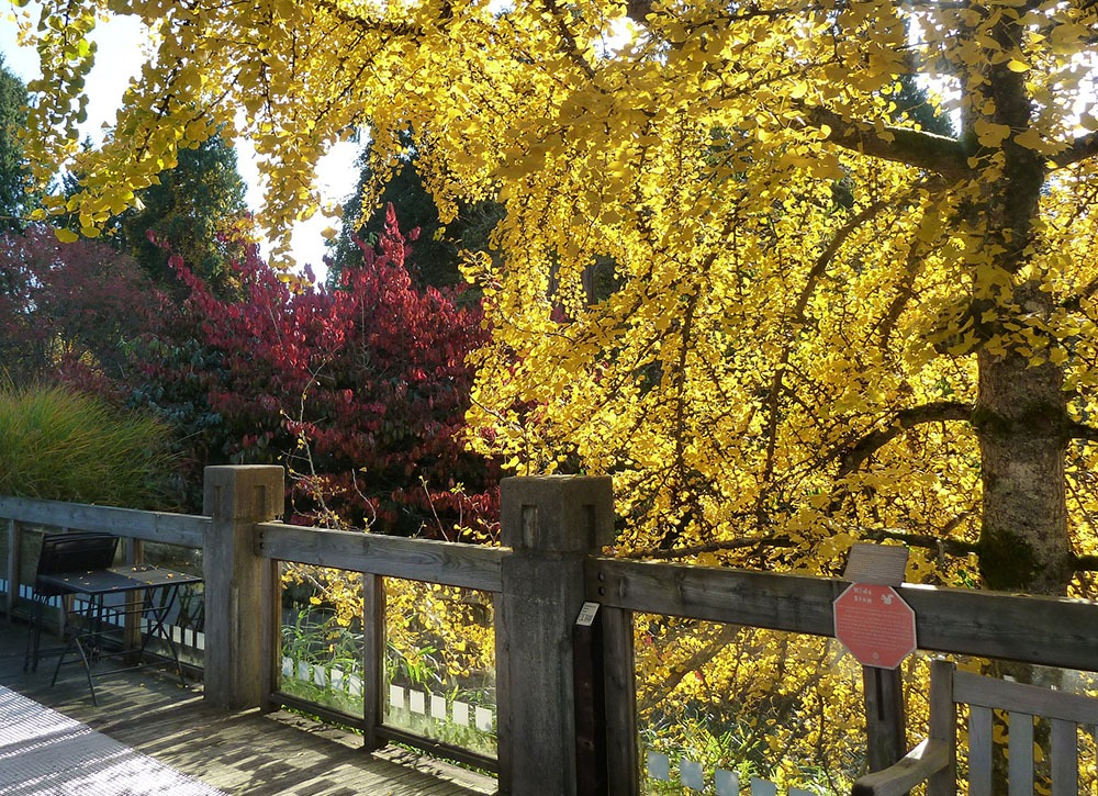 Fall colours at UBC (Wendy Cutler/Flickr)
