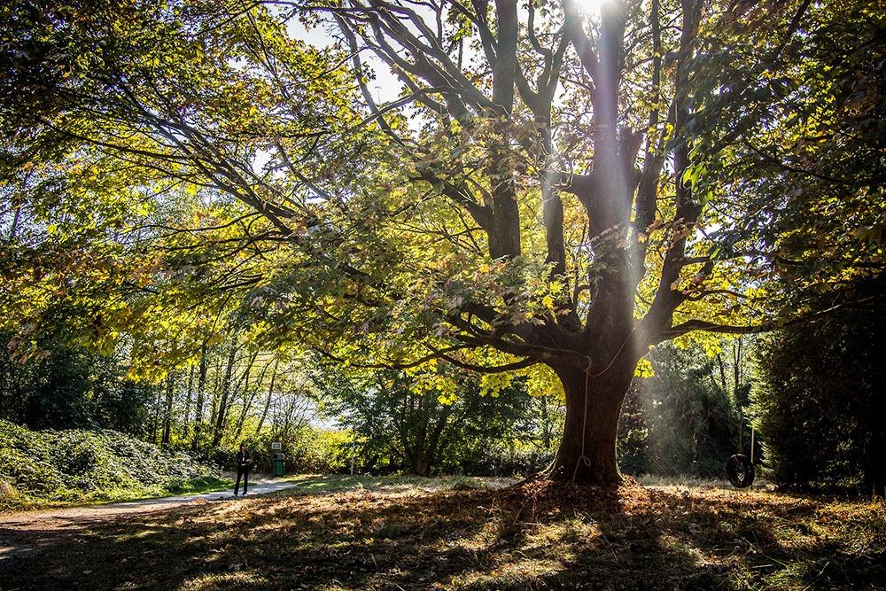 Fall in Deer Lake Park (Kenny Louie/Flickr)