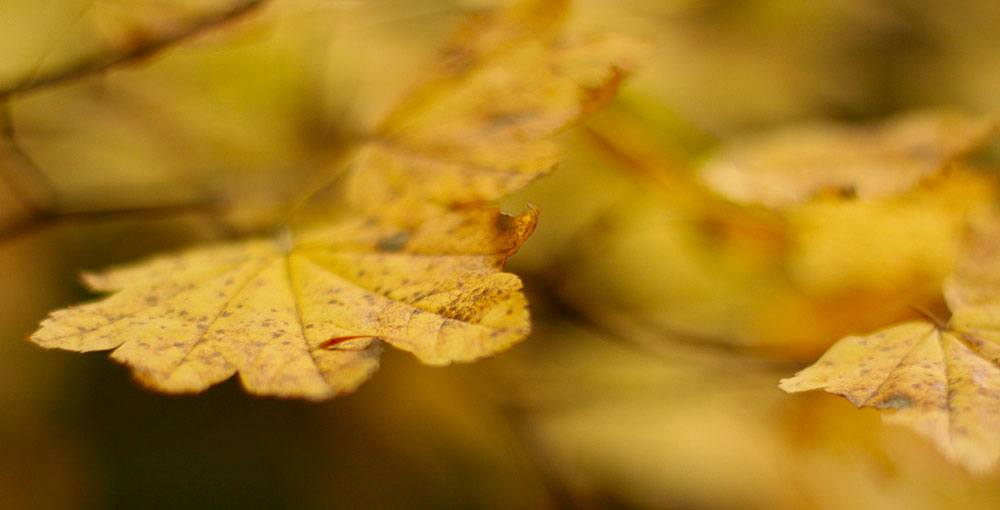 Fall leaves at Green Timbers Park (waferboard/Flickr)