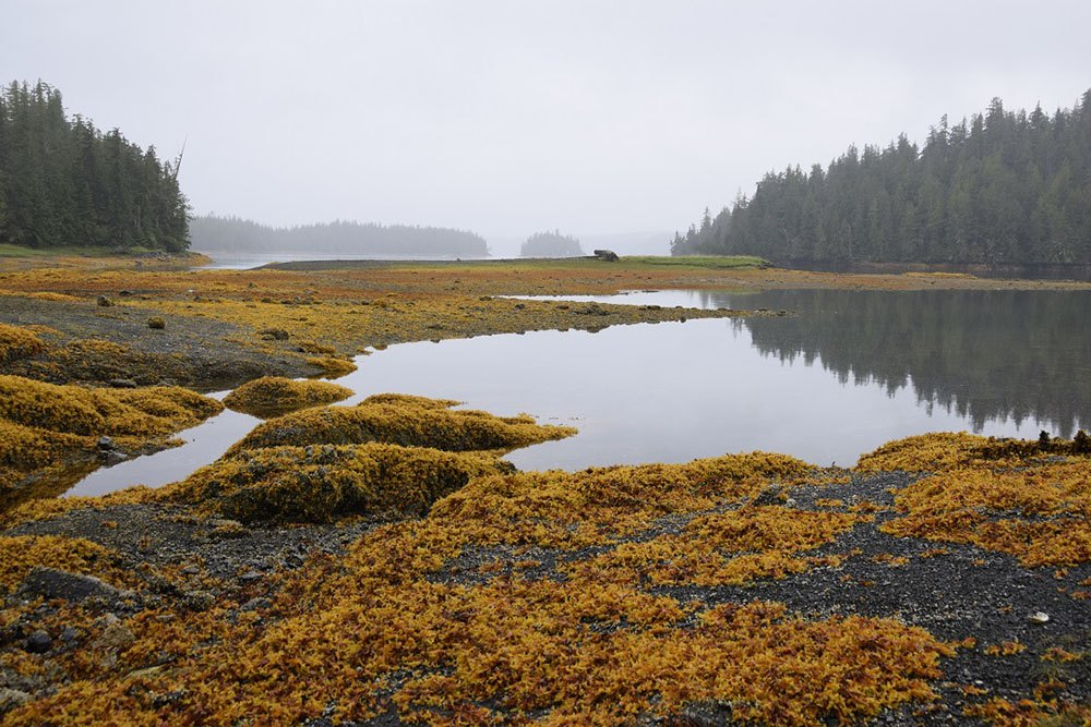 The Gullchucks Estuary on Denny Island is a place of deep cultural and ecological importance. (Nature Conservancy of Canada)