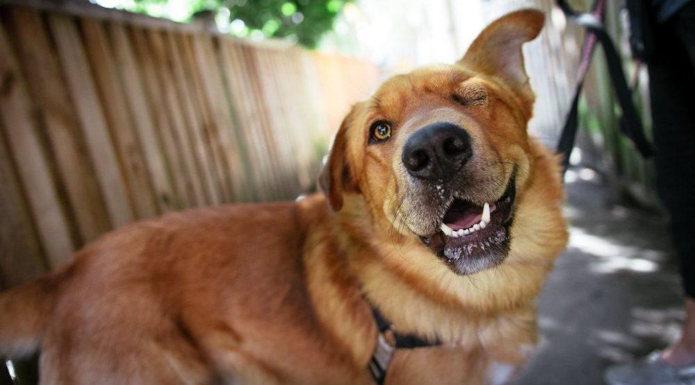 Adopt Me: Tuffy the one-eyed wonder