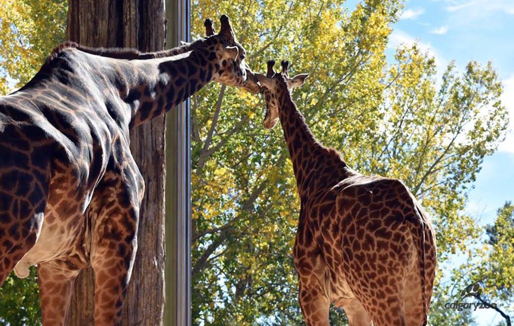 Image: The Calgary Zoo / Facebook