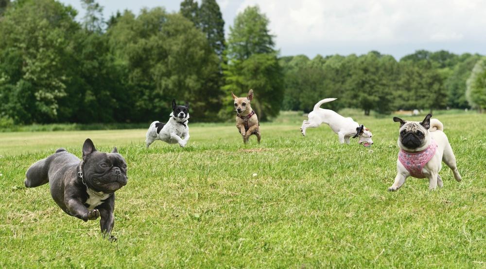 Montreal is hosting a massive dog festival