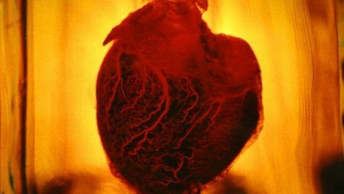 Photo via Artist Rendering, Human Heart