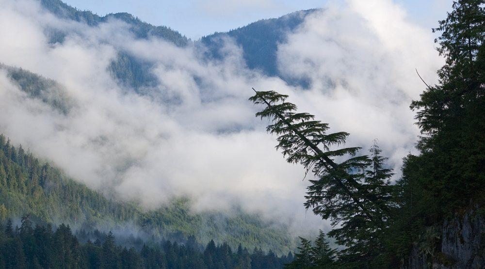Great bear rainforest e1474924457357