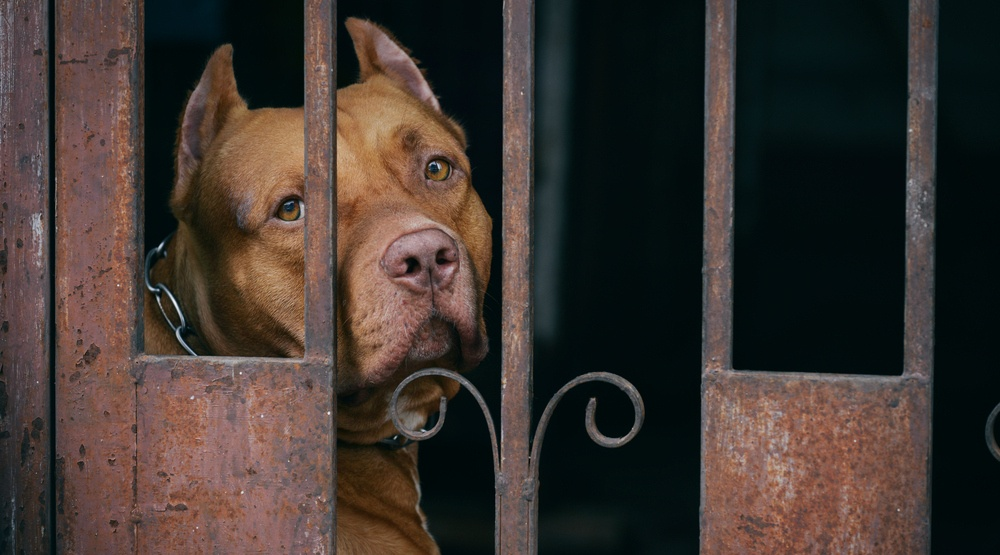 Shameful Montreal pit bull ban passes with a vote of 37-23
