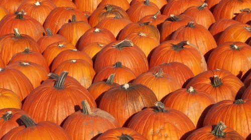 Pumpkins (Leena Robinson/Shutterstock)