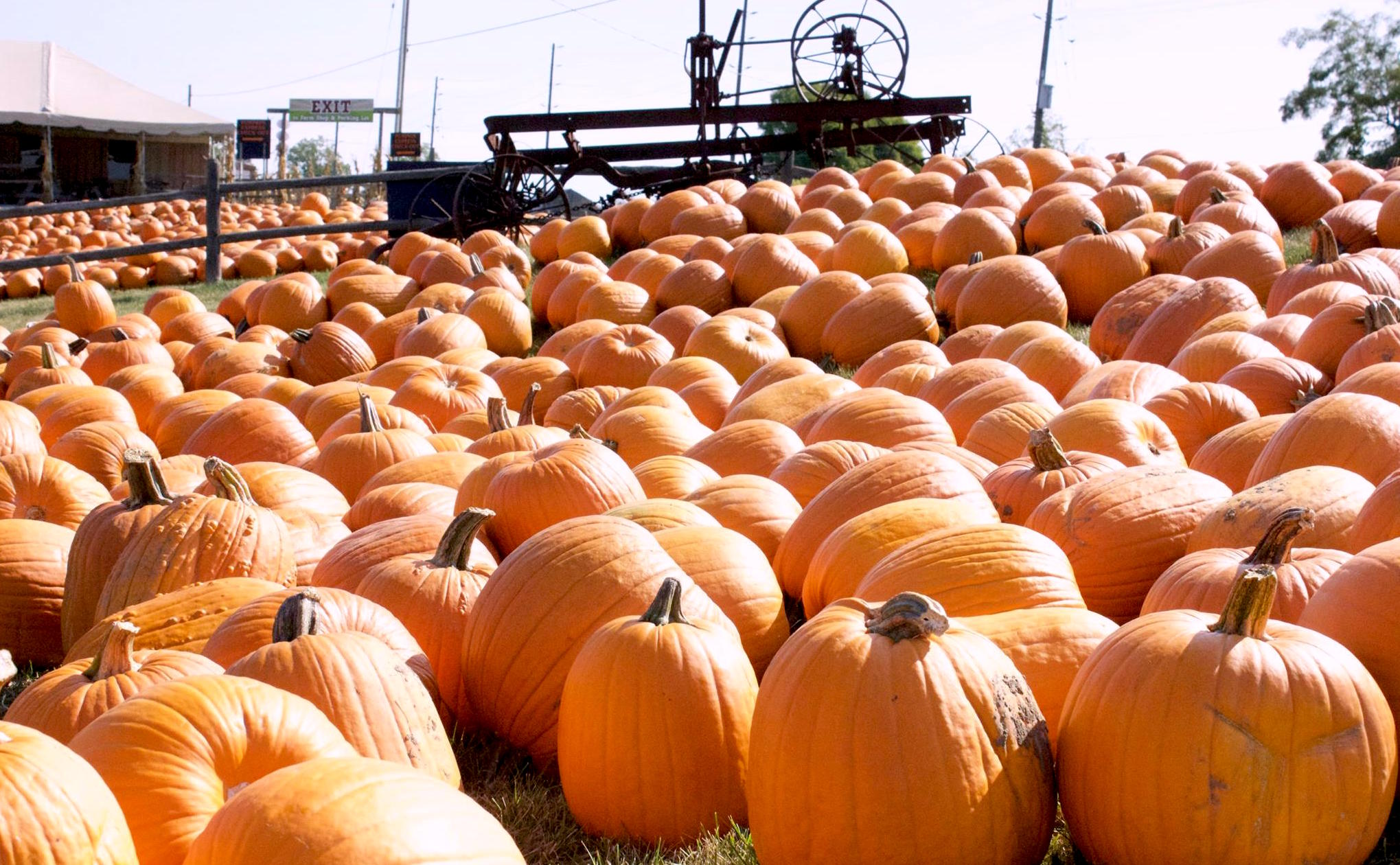 11 pumpkin patches in the GTA you can visit this October