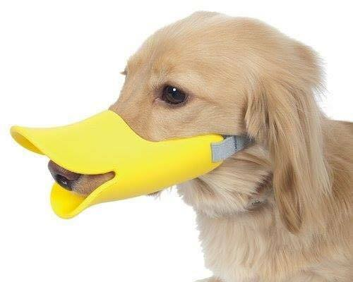 Duck Like Dog Muzzle