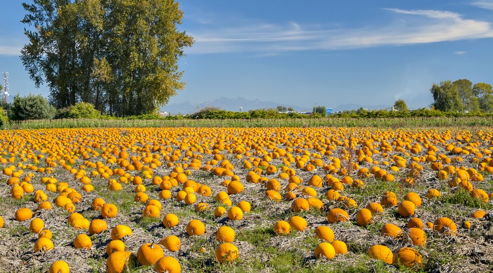 14 pumpkin patches near Vancouver you need to visit this fall