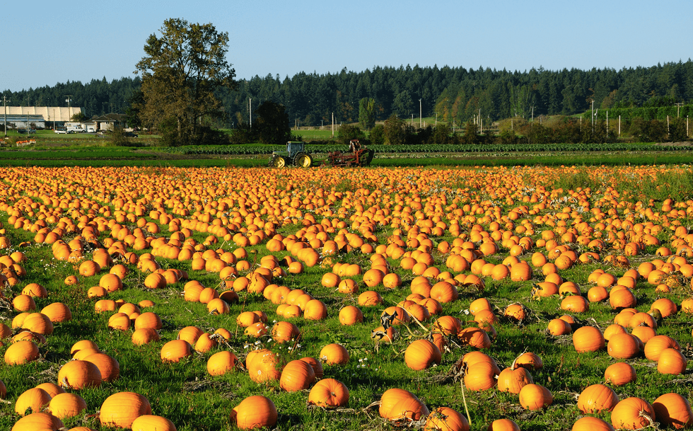 Pumpkin patch/ Shutterstock