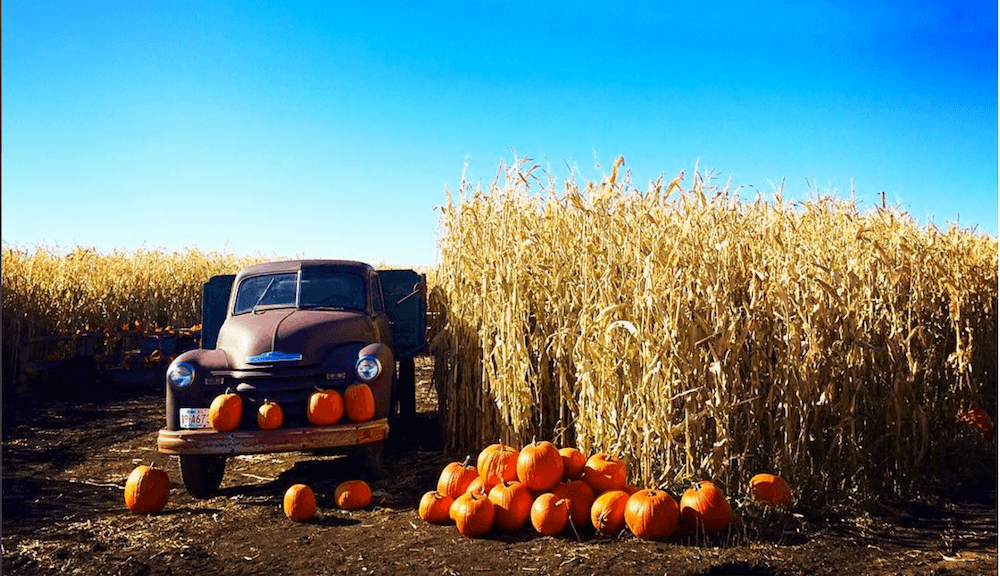 6 Calgary pumpkin patches to find your perfect Jack-O-Lantern