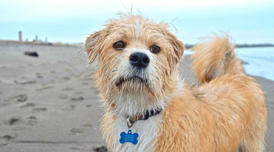 Rescue Me: Oscar the 'Disney dog'