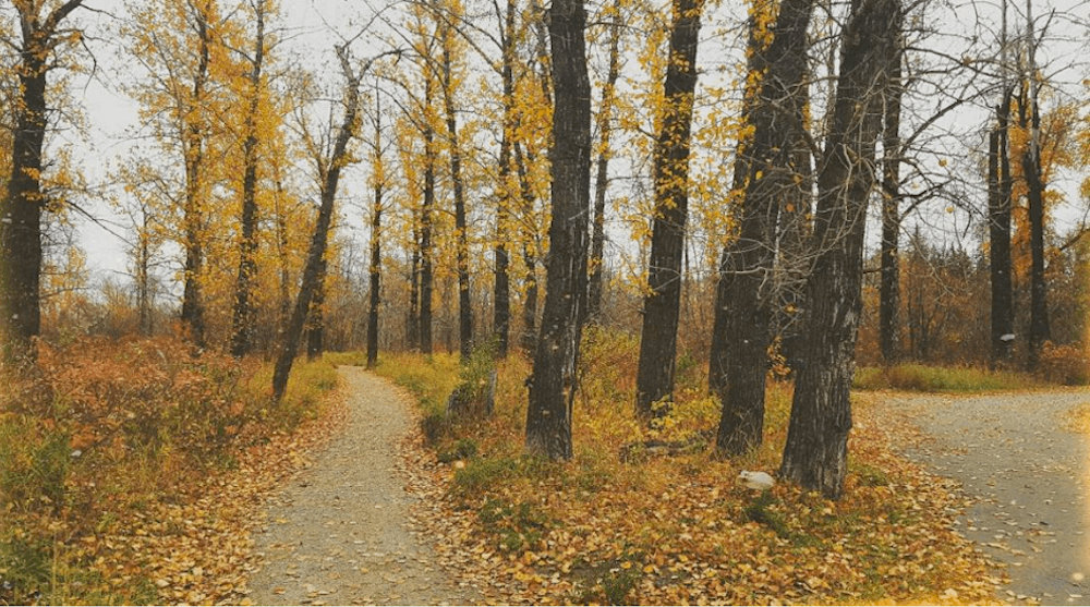 5 must experience inner city Calgary hikes