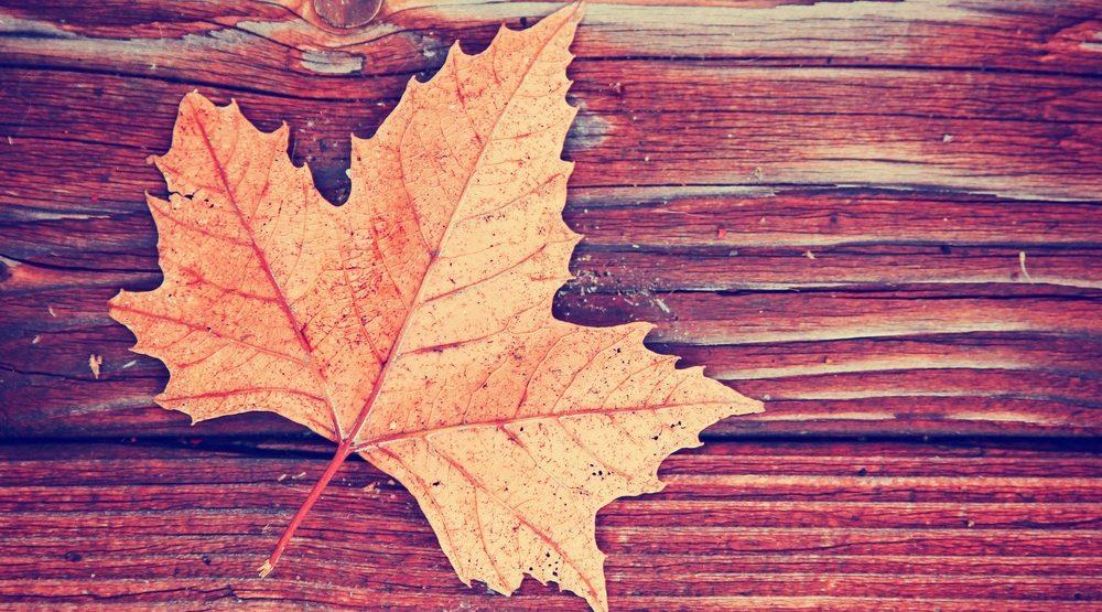 Fall leaves / Shutterstock