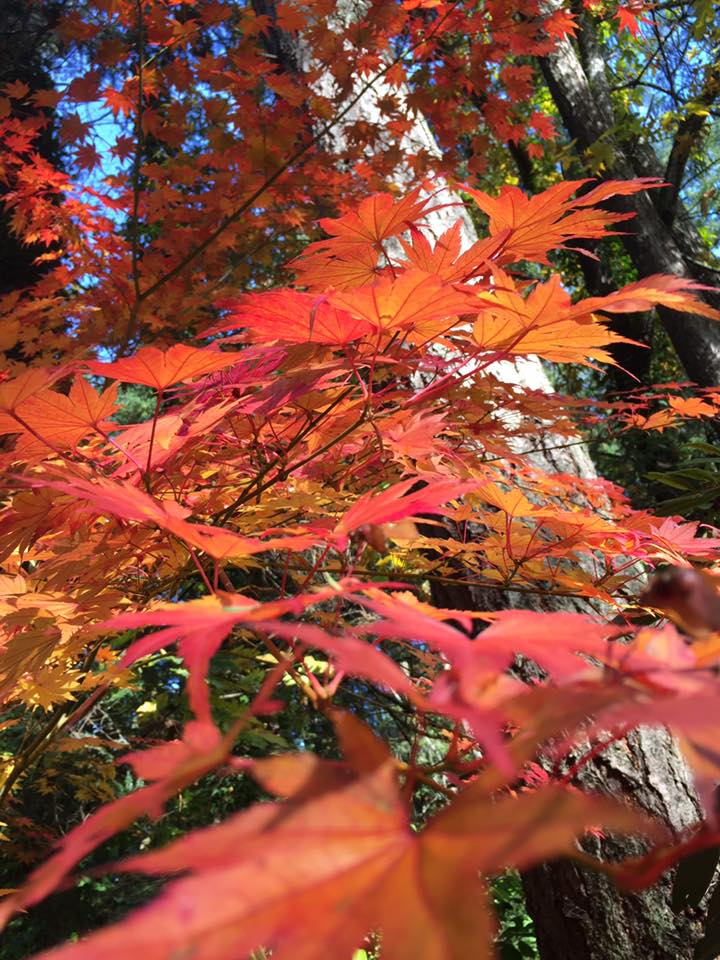 Fall leaves in Vancouver (Tania Watt, submitted via Daily Hive Vancouver on Facebook)