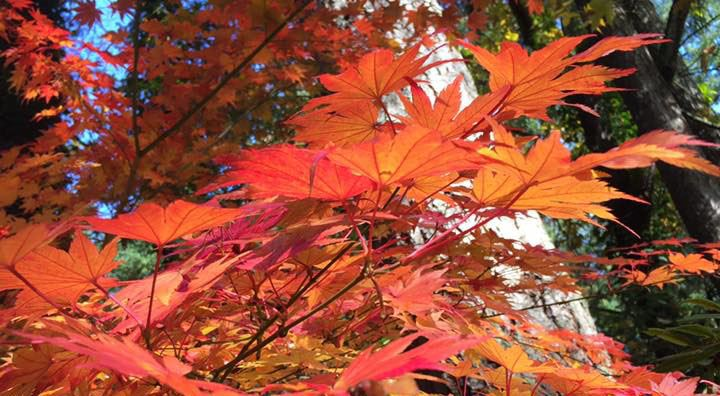 18 photos of fall leaves around Vancouver