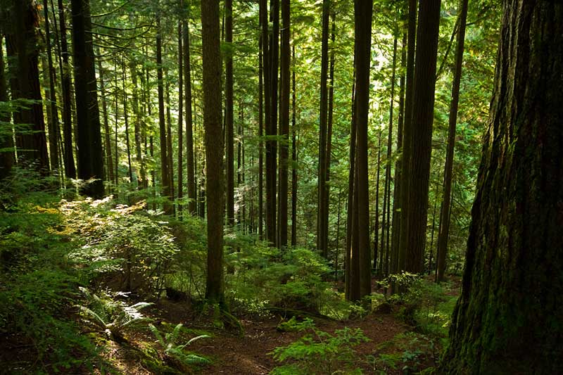 An image of Lynn Valley