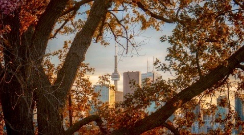 14 photos that show how beautiful Toronto is in the fall