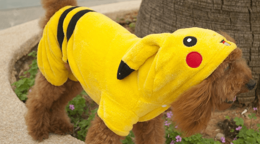 Star Wars and Pokemon top list of most popular pet Halloween costumes 2016