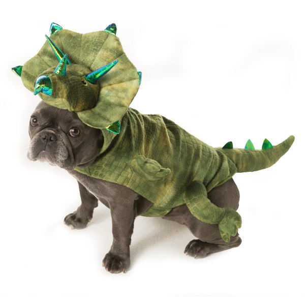 Dinosaur costume from PetSmart