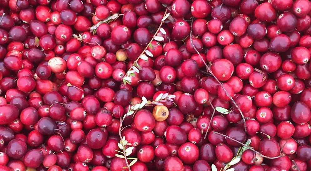 Cranberries richmond country farms