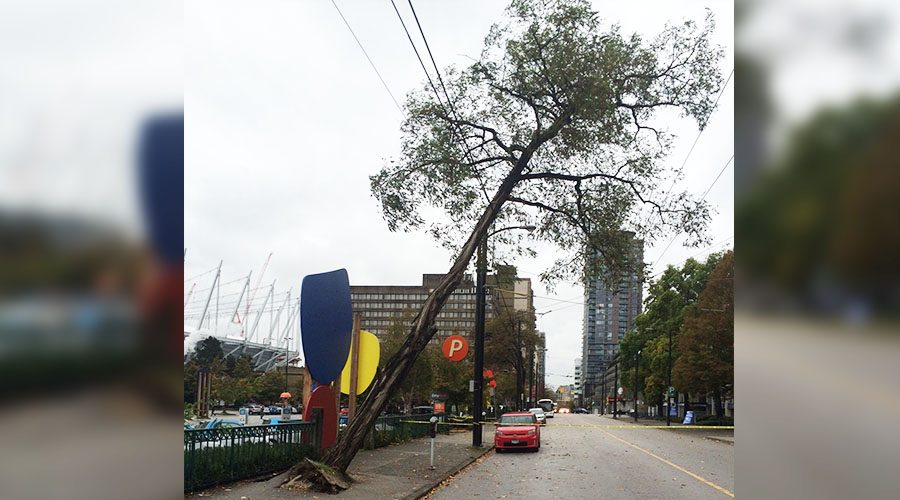 Storm fells tree in downtown Vancouver, impacting transit across the region