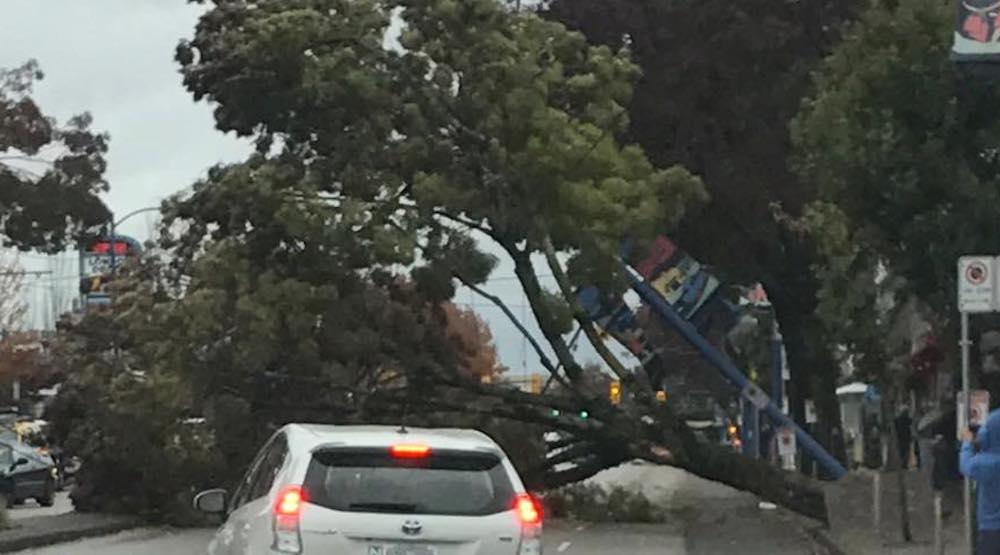 Tree fall vancouver kingsway