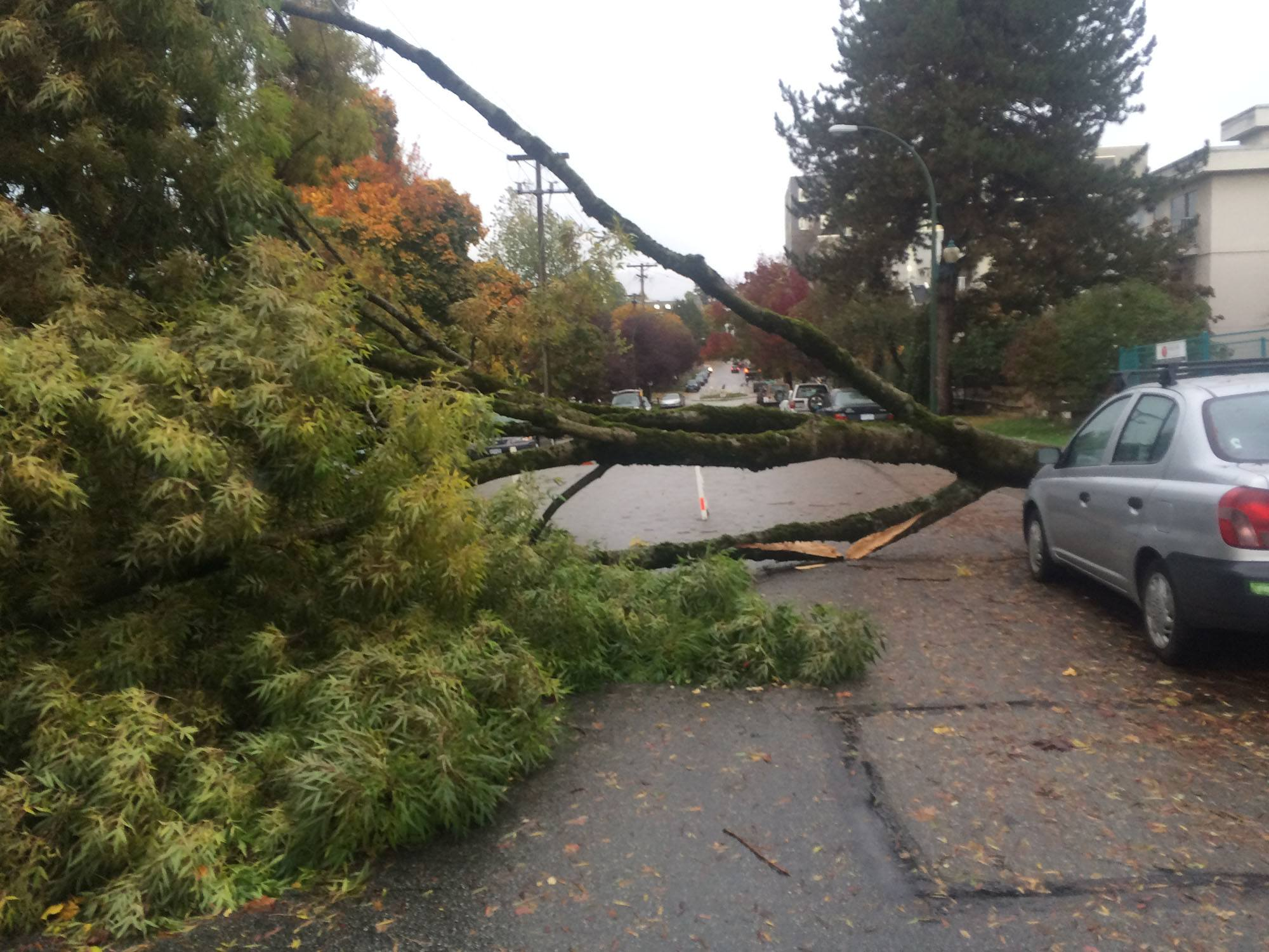 A huge tree fell down in East Vancouver during Friday's storm (Kath Will)