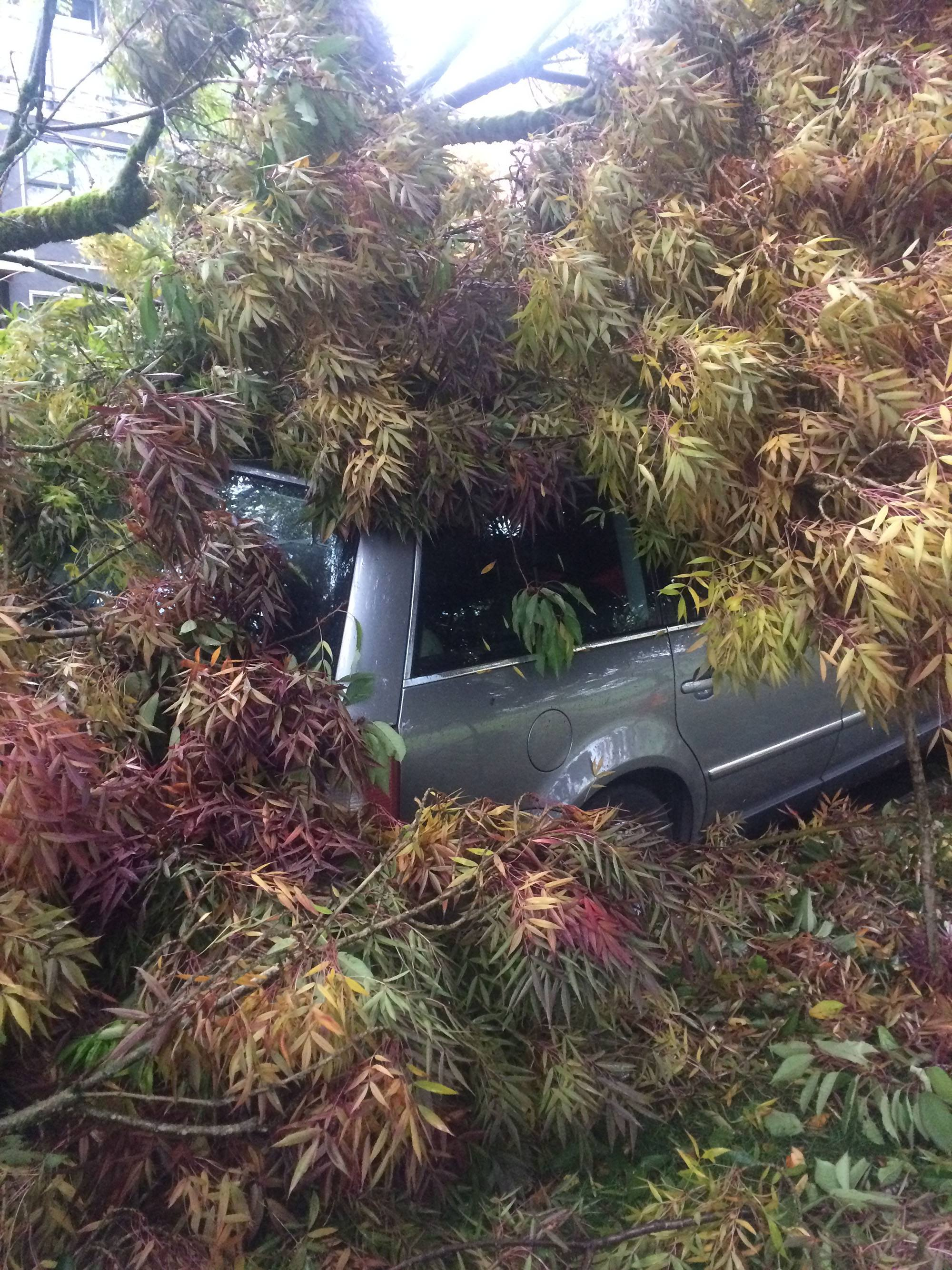 Kath Will's car was engulfed by a fallen tree during the storm in Vancouver on Friday (Kath Will)
