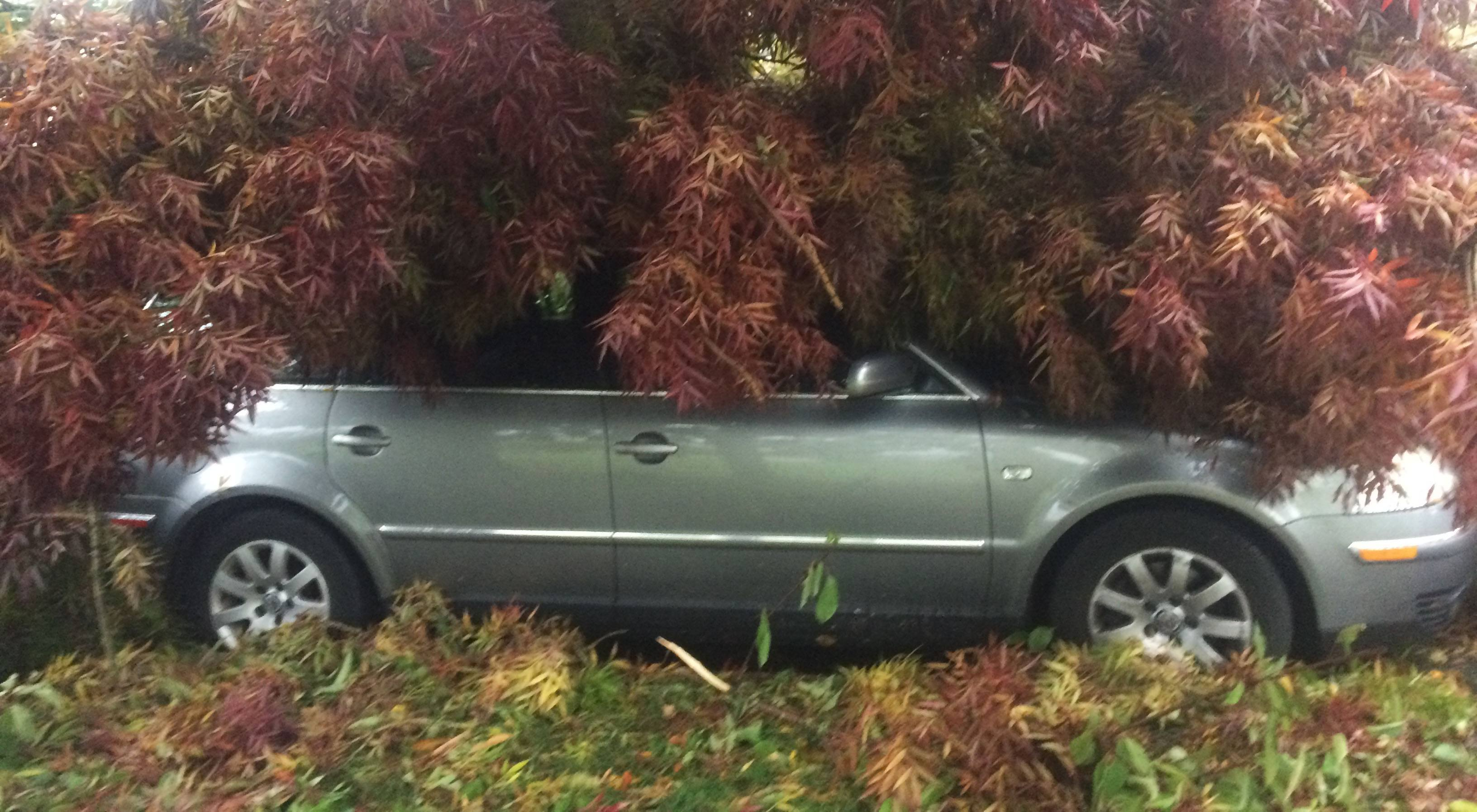 Car engulfed by tree during storm in East Vancouver (PHOTOS)