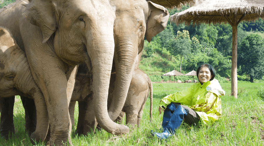 Why you should take elephant riding off your bucket list