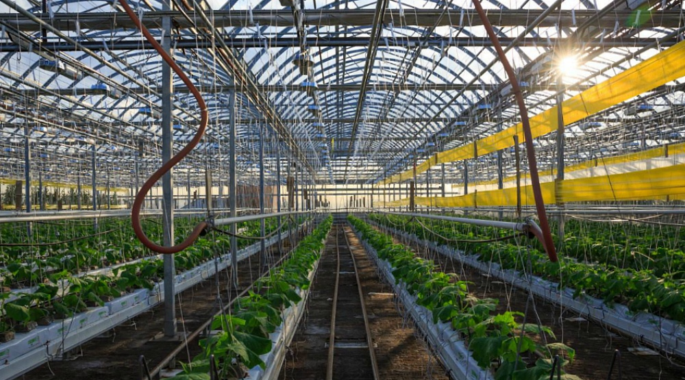 Take a free tour of the world's first commercial rooftop greenhouse in Montreal
