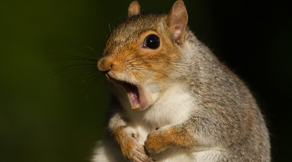 Police investigate break-in on Vancouver Island, turns out to be squirrel