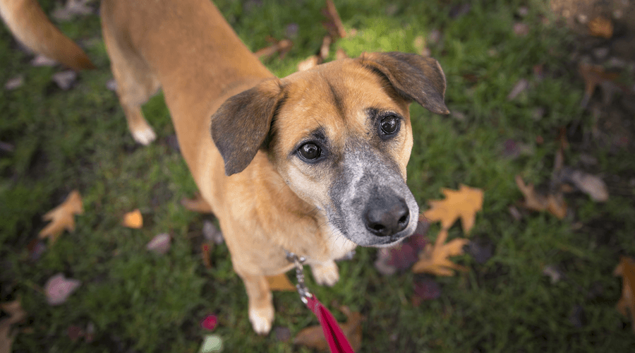 Adopt Me: Buster the meat-trade survivor