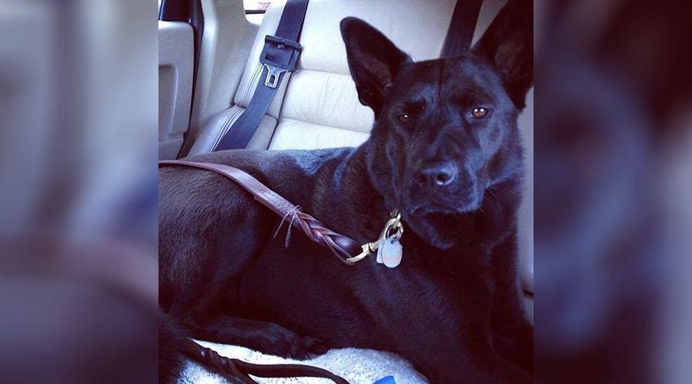 Maggie trout lake park dog death ali fluevog