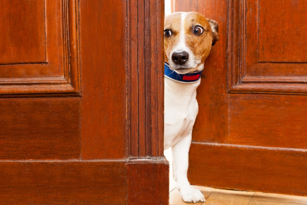 Image: Scared dog / Shutterstock