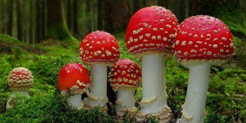 Mushroom or toadstool? (Eventbrite)
