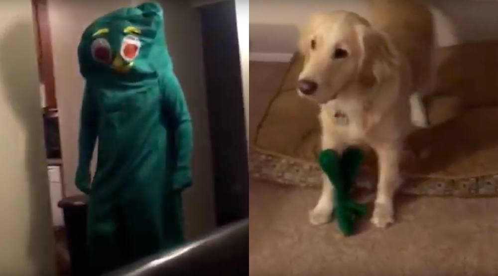 Dog goes nuts after owner dresses up as Gumby - her favourite chew toy (VIDEO)