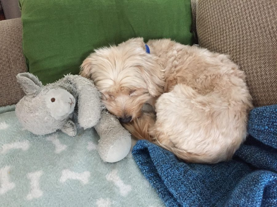 Rescue Me: Toby the pup flies to YVR for a new life