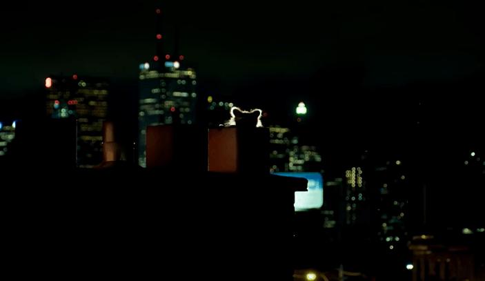 Toronto Raccoons