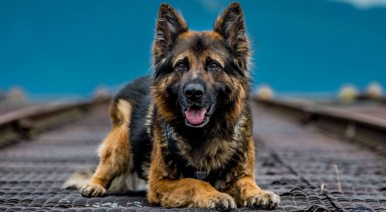 Dog squad calendar3