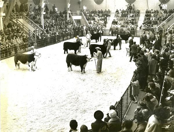 royal winter fair toronto