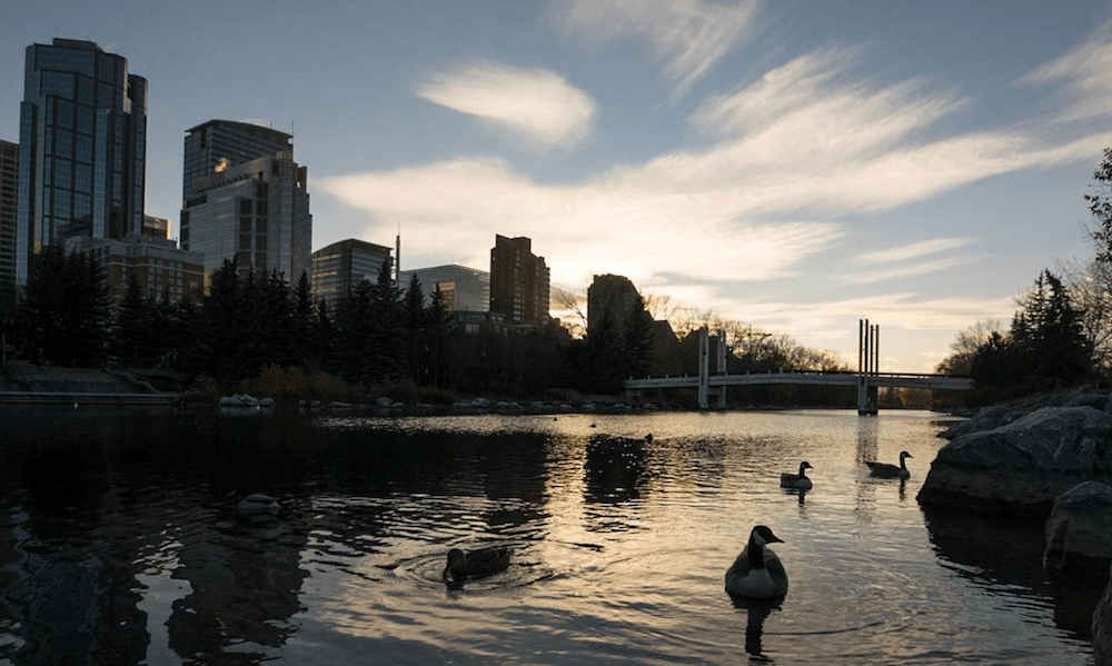 17 things to do in Calgary this weekend: November 4 to 6