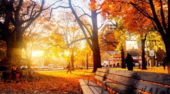 31 photos that show how spectacular Toronto is in the fall