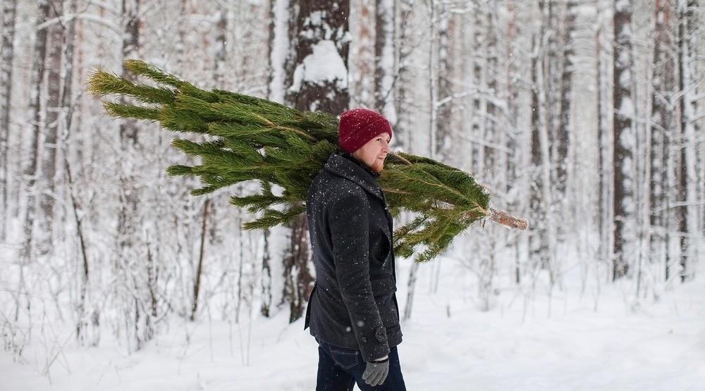 christmas tree - Where To Buy A Christmas Tree