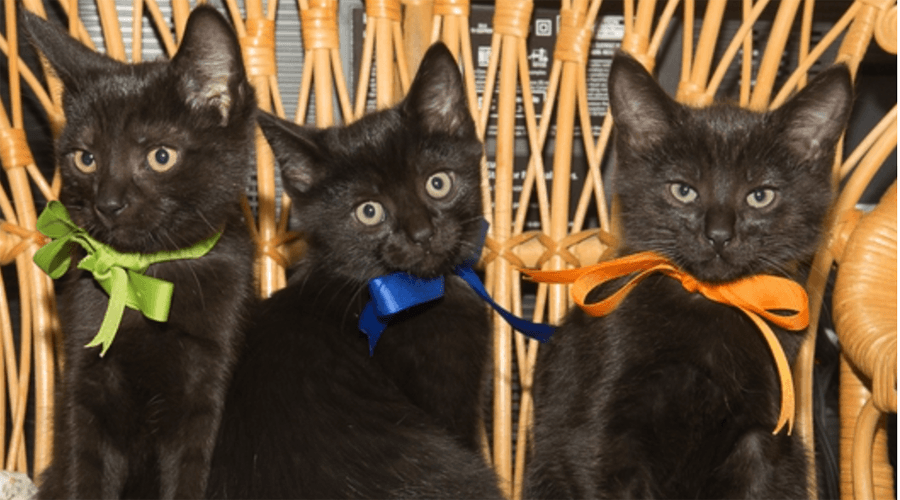 Warm fall results in Vancouver's kitten population to boom