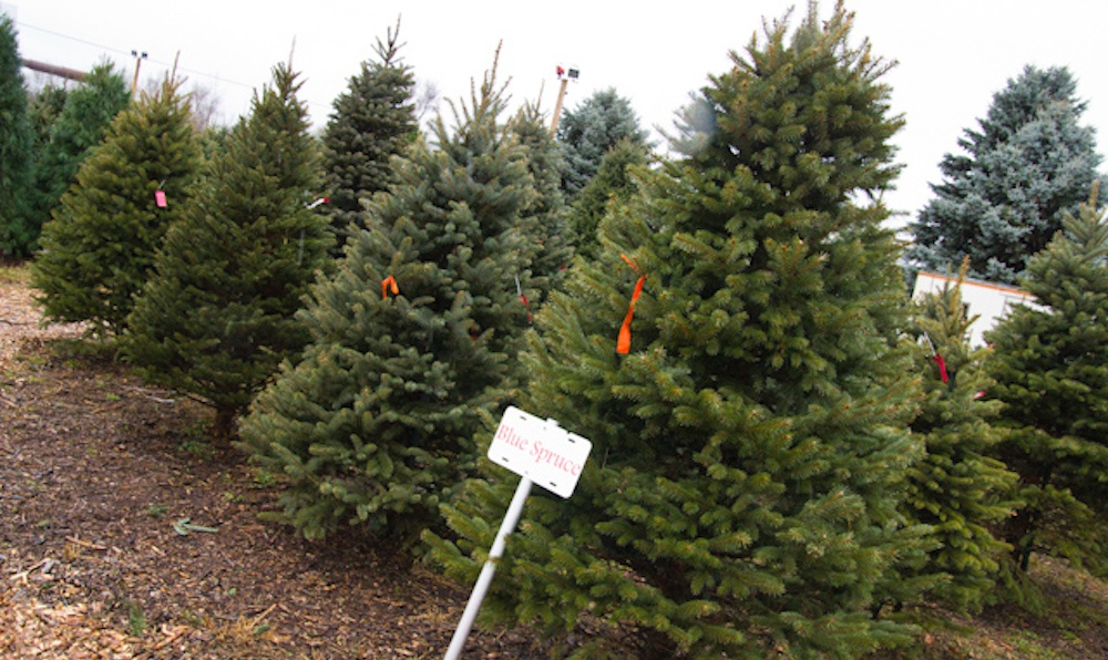 8 places to get a Christmas tree in Calgary