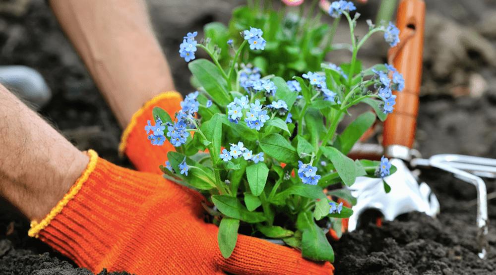 New pollinator garden in Vancouver needs volunteers this Saturday